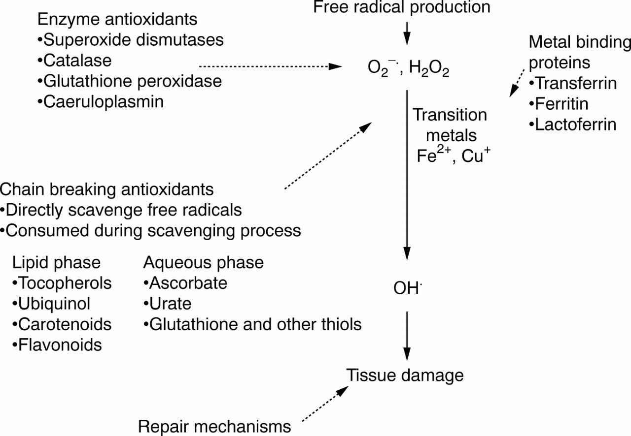 Antioxidants in health and disease   Journal of Clinical