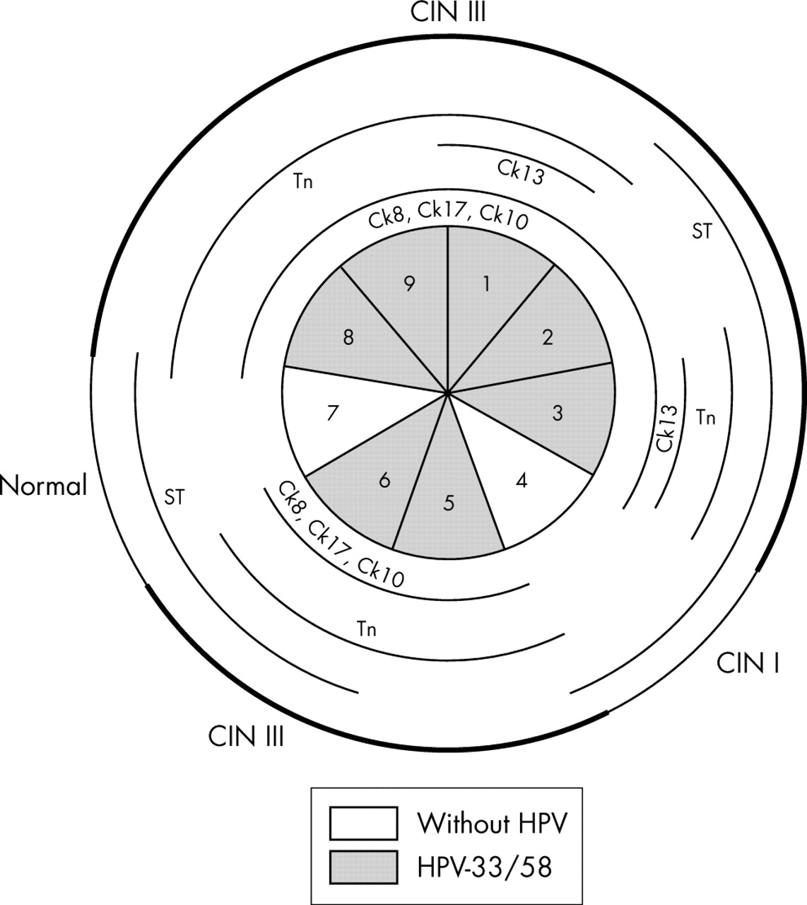 Distribution of HPV infection and tumour markers in cervical ...
