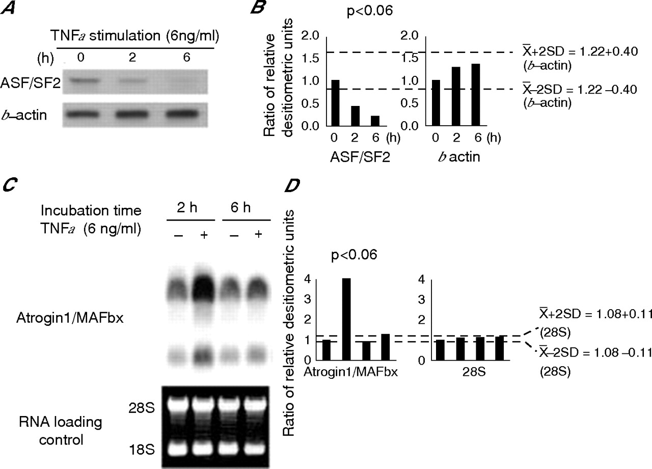 Alternative splicing factor ASF/SF2 is down regulated in