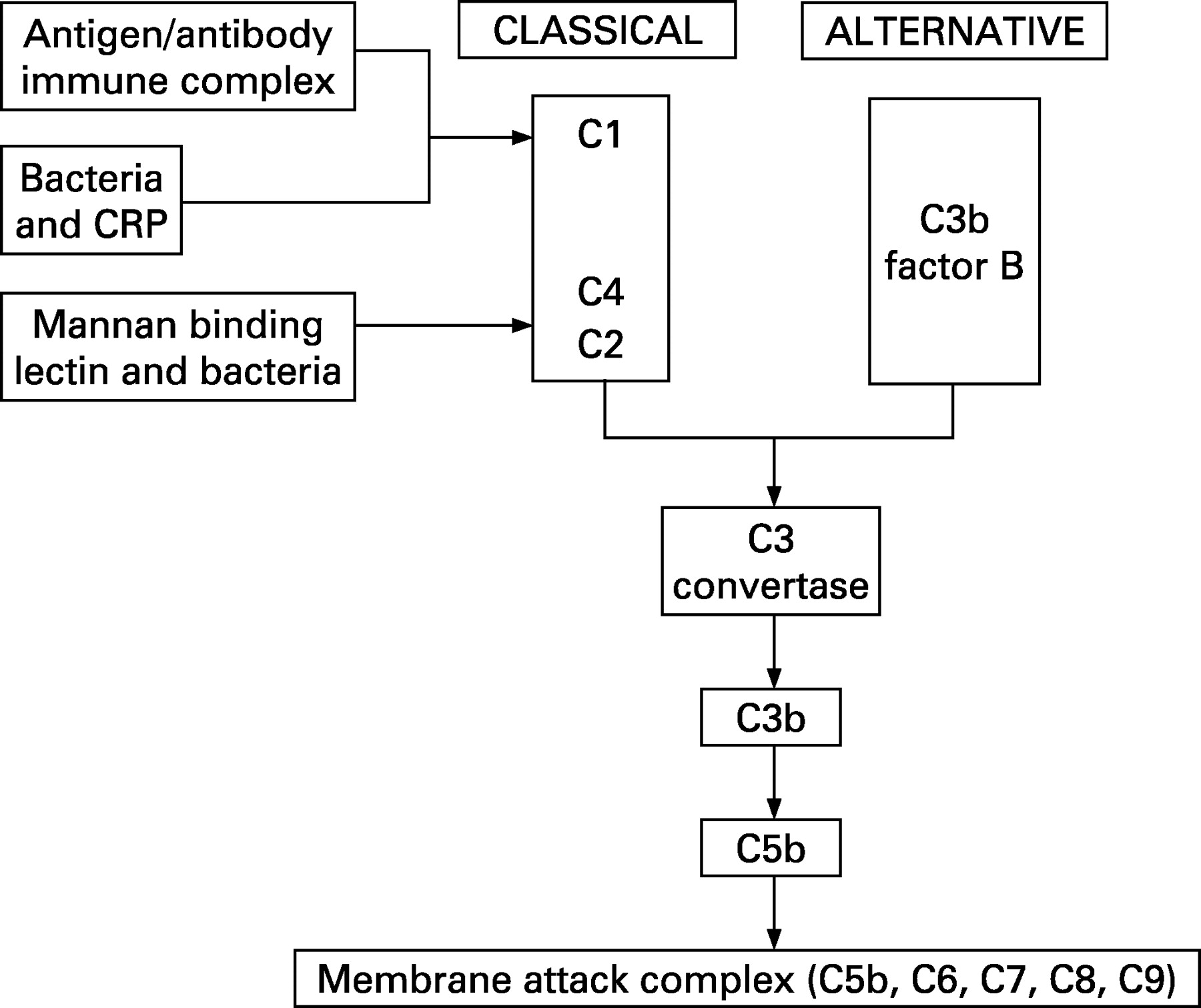 Complement Deficiency And Disease