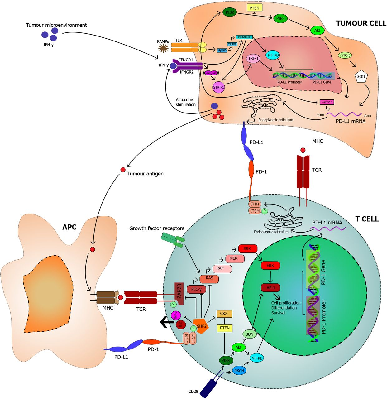 PD-L1 | Journal of Clinical Pathology