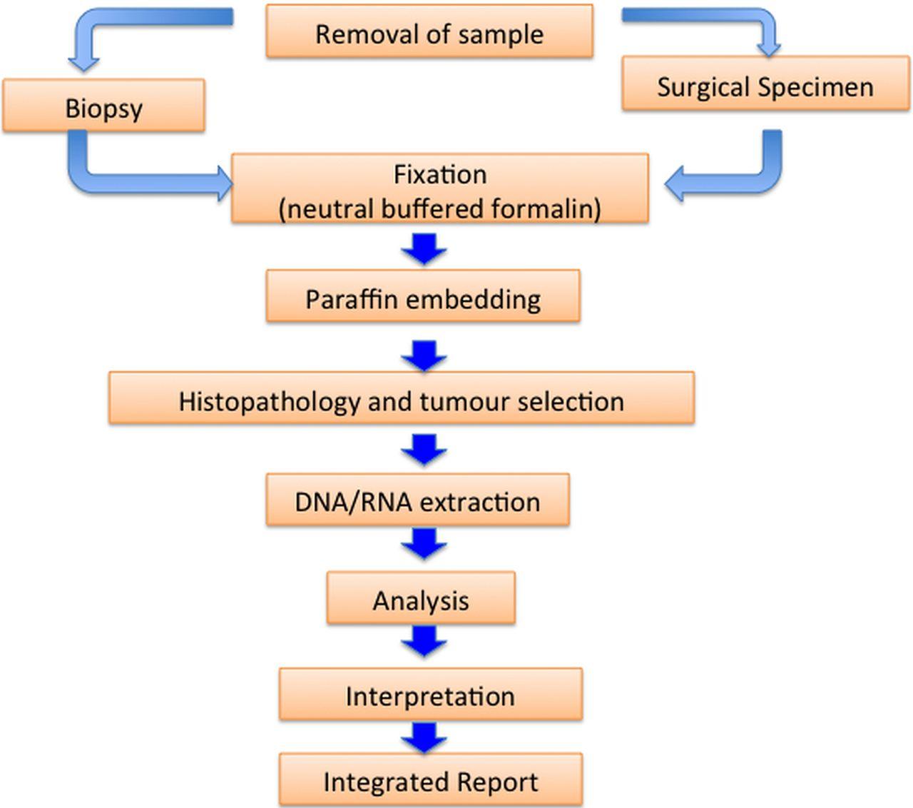 Guidance For Laboratories Performing Molecular Pathology