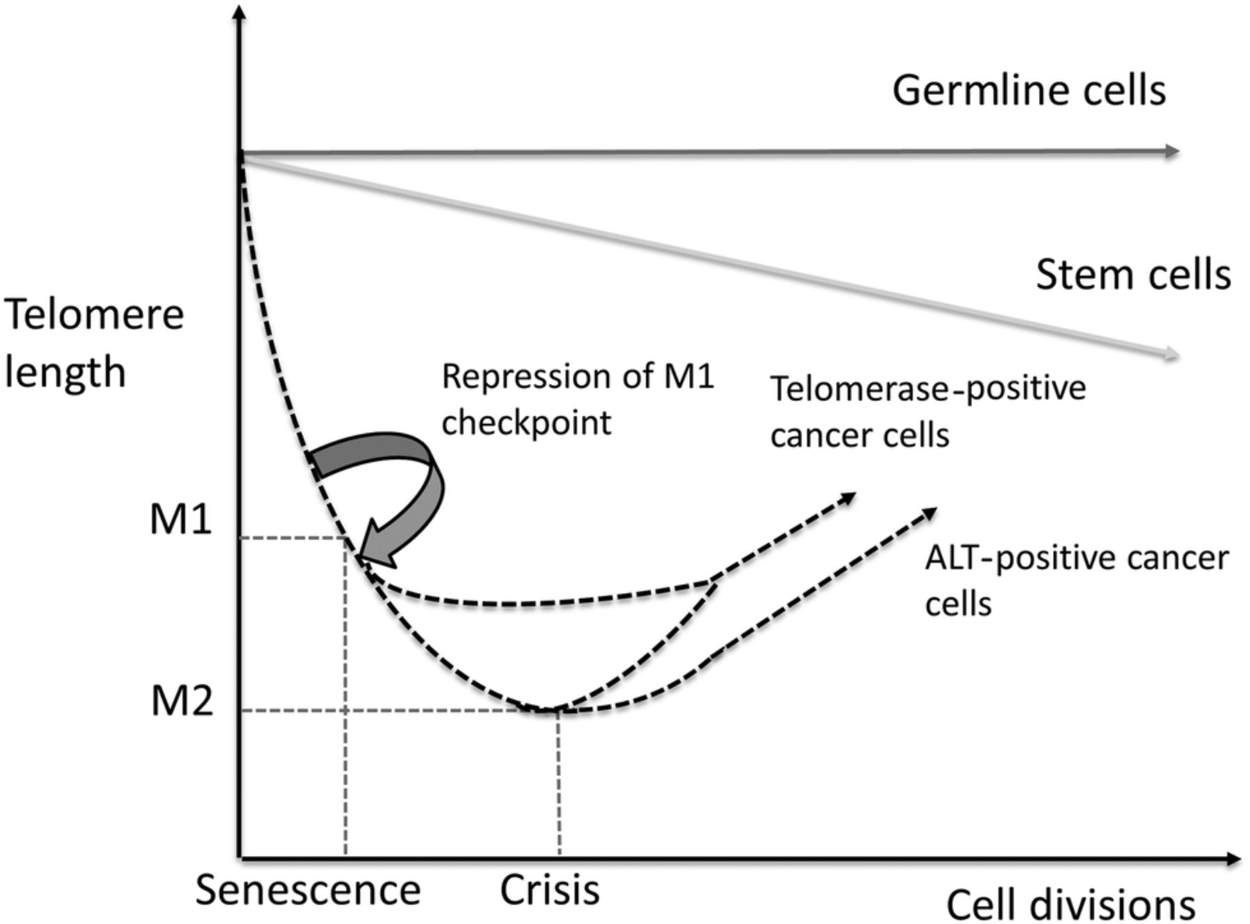 Telomere maintenance in soft tissue sarcomas | Journal of ...